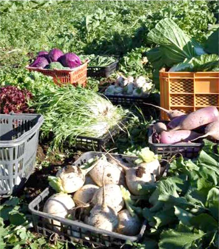 あぶらや農園の野菜